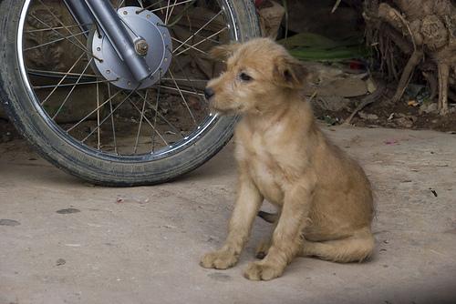 puppy-modi